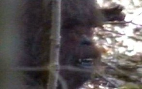 Chewbacca Mask, Bigfoot, Or Total Bullshit?