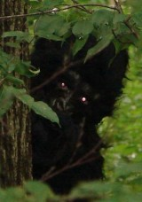 Bigfoot Child Hiding In Trees For Fear Human Kids Will Tease Him