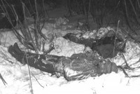 Did Big Foot Kill These 2 Big Foot Hunters?