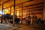 Animals Inside The Ark
