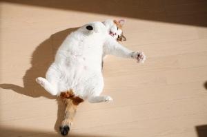 Solar Powered Cat Acting Like Non-Solar Powered Cat