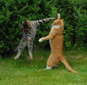 Liberal Cats: They Fight Each Other Whilst Republican Cats Run The Yard
