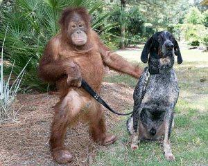 Democrats Make Great House Pets And Servants, Says This Republican Orangutan.
