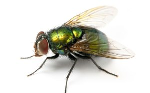 The Fly Who Filed The Law Suit
